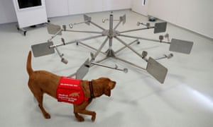 Medical Detection Dogs runs a training exercise with dog Florin. Medical Detection Dogs is looking into whether man's best friend could play a role in preventing the spread of coronavirus, Milton Keynes, Britain March 31, 2020.