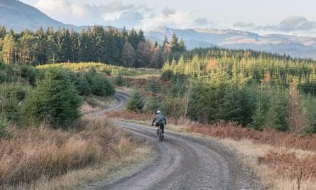 Mountain biker in Grizedale Forest