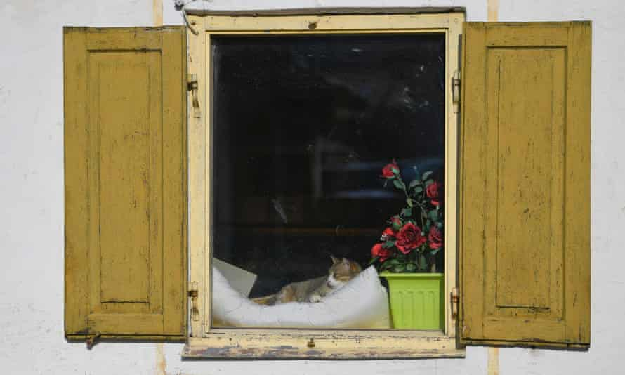 Street sounds from an open window prove no problem for this cat in Germany