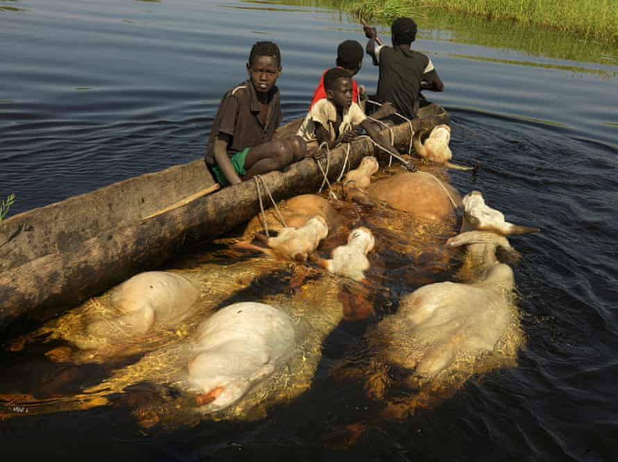 A family migrate to higher ground with their livestock