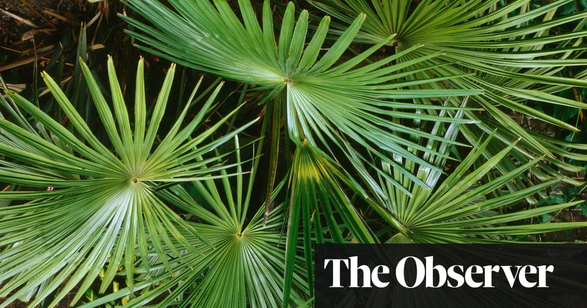 Think palms won't grow in Britain? Think again