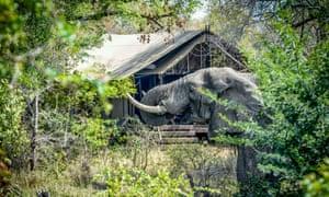 Honeyguide Ranger Camp, South Africa