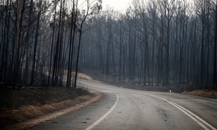 Burnt forest between Orbost and Cann River along the Princes Highway