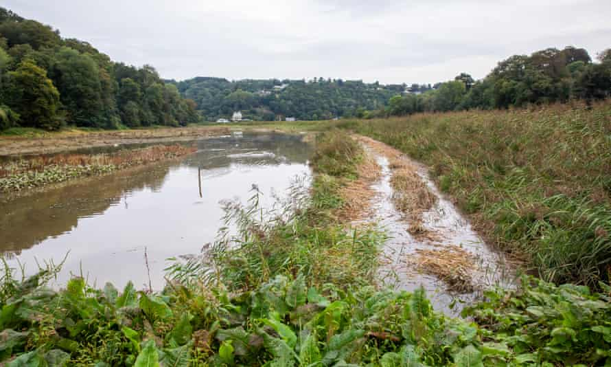 Land owned by National Trust at Cotehele Quay in Cornwall which is being intentionally flooded.