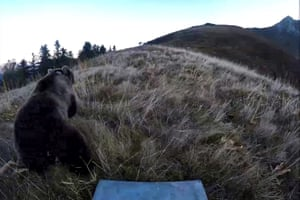 Screen grab taken from a video showing the release of a female bear in the Bearn mountains, France