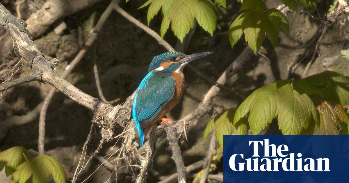 Kickstart for bad birdwatchers: joining an expert-led tour on the Thames