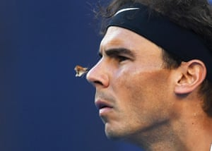 A moth lands on the nose of Rafael Nadal during his quarter-final match against Milos Raonic at the Australian Open. Nadal reached the final where he faced his old foe Roger Federer for the first time in a grand slam final since 2011. The pair delivered a ding-dong five-set contest for the ages with Federer ultimately triumphing 6-4, 3-6, 6-1, 3-6, 6-3.