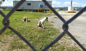 Abandoned dogs Puerto Rico