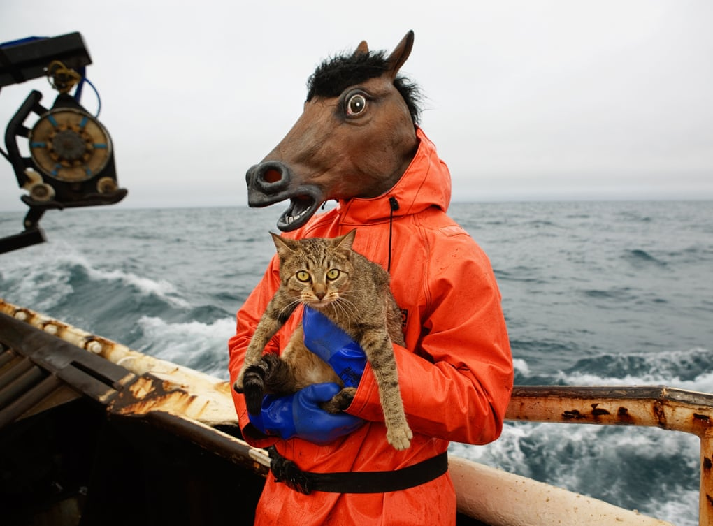 Cat Goes Crab Fishing with a Horse