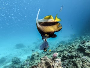 Fish swimming off the coast of Egypt's Red Sea resort of Hurghad