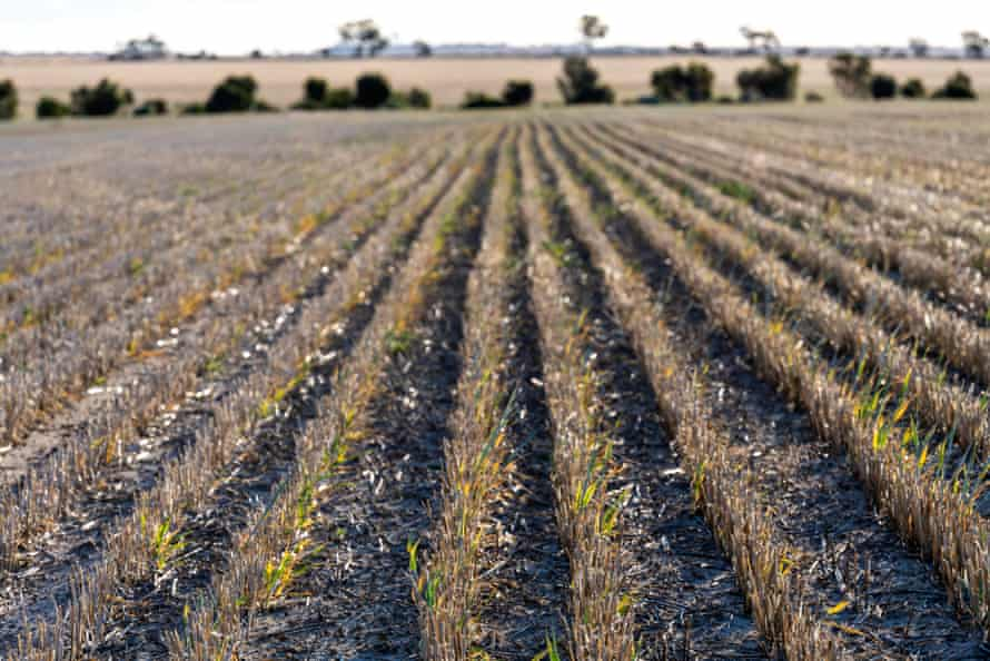 Rows of crops on the property of Simon Wallwork and Cindy Stevens