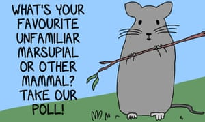 Which weird Australian fuzzy mammal you are possibly unfamiliar with is your favourite? Let's find out!
