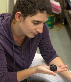 Evolutionary biologist Julia Sigwart.