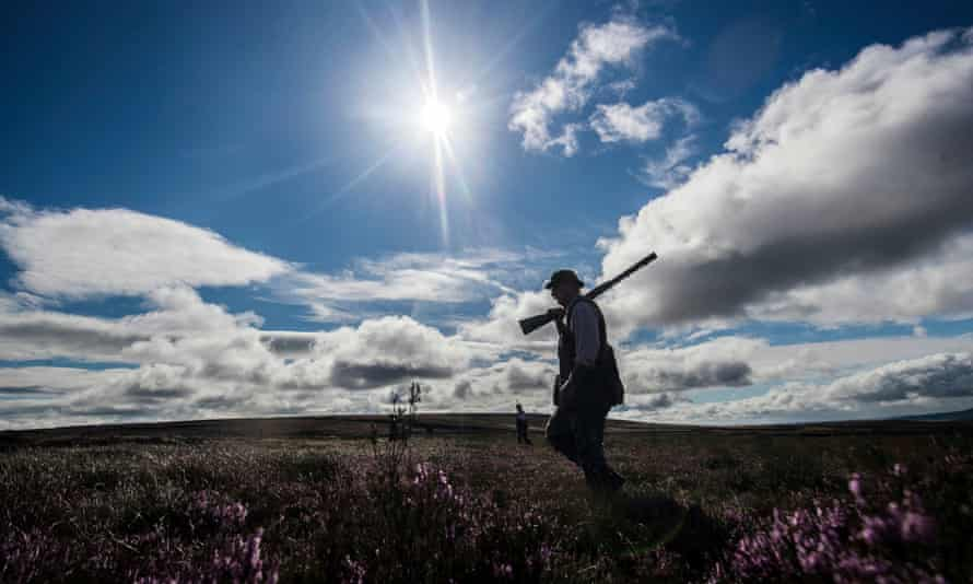 Grouse shooting in Yorkshire