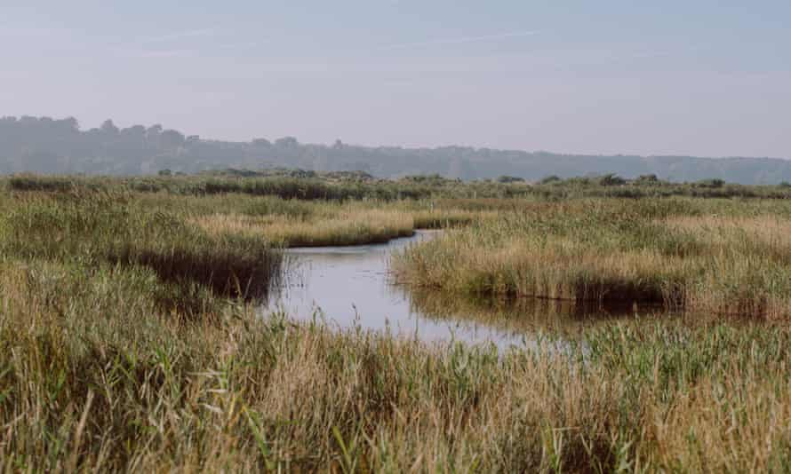 Dunwich marshes