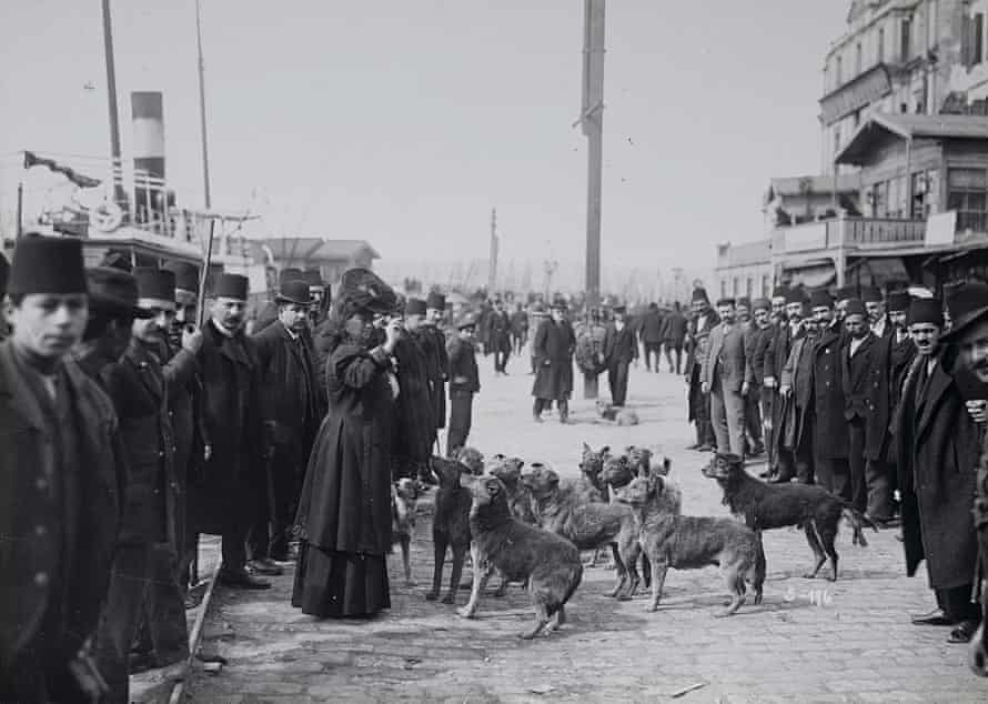 Image from the Street Dogs of Istanbul exhibition at the Istanbul Research Institute
