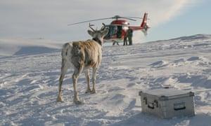 Reindeer helicopter