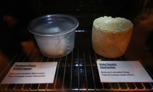A mozzarella (left) made with bacteria sampled from the belly button of Professor Green, and a Stilton cheese made with bacteria sampled from the nose of food writer Ruby Tandoh.