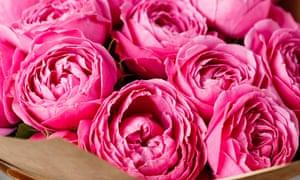 Rose peonys
