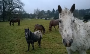 Pipewell Hall and equine contingent