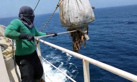 A worker aboard the Awassi Express dumps a decomposed carcass