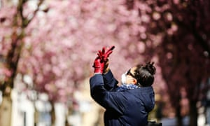 A woman takes a picture at the Cherry Blossom Area in Bonn, Germany, during coronavirus lockdown.