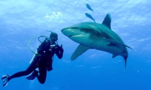 Lauren Smith up close photographing an oceanic.