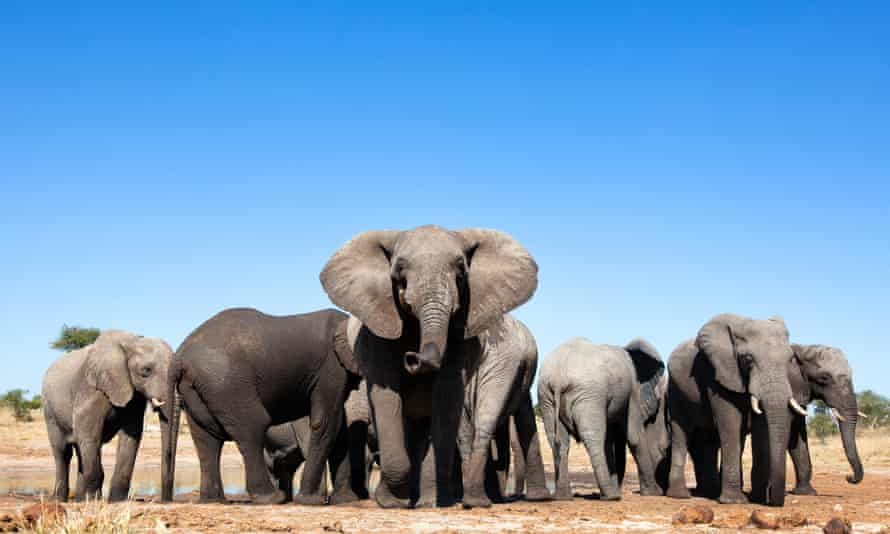 Namibia plans to auction 170 wild elephants because of drought and an increase in numbers bringing them into conflict with people.