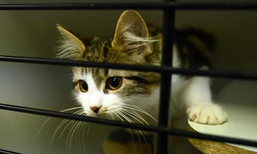 Cat in animal shelter