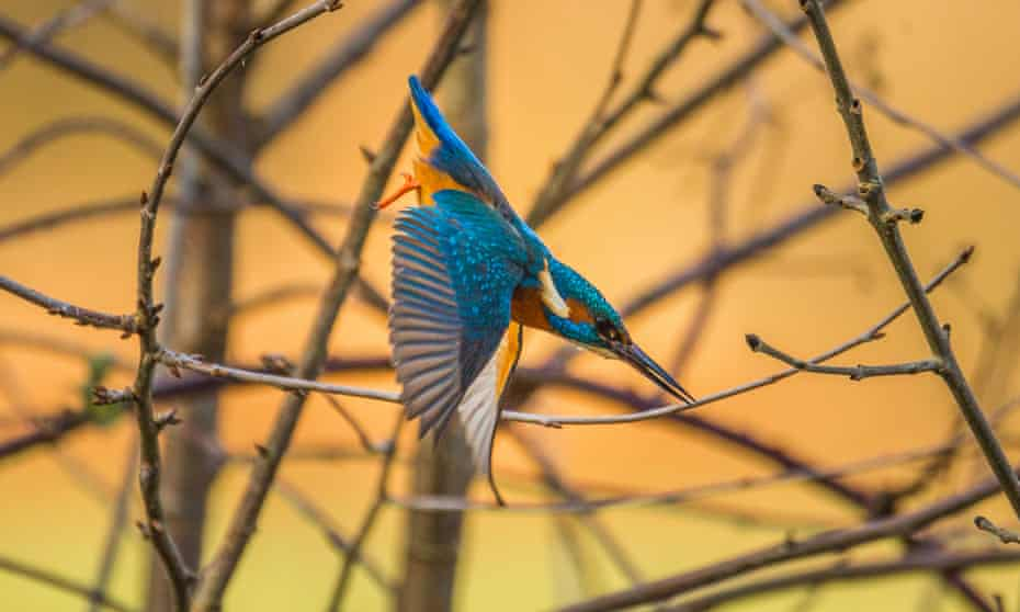 A photo of a kingfisher in Sale water park, Greater Manchester taken during the second week of February.