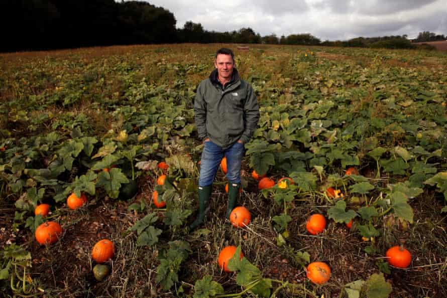 Ian Piggot among the pumpkins.