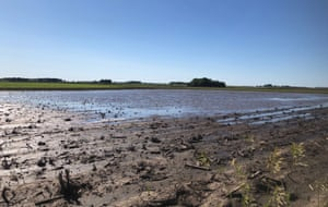 Puddles in the corn fields near Sheffield, Illinois. Heavy rains have caused unprecedented delays in US corn planting this spring.