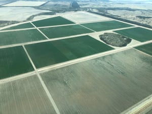 An aerial photograph of cotton growing in southern Queensland.