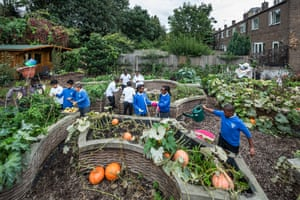 Over four years pupils at Christ Church primary school have transformed an abandoned allotment into this thriving vegetable garden. Read more about their project and others in the Community Project series on Guardian Live Better.