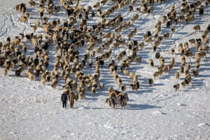 Van, Turkey. Shepherds who had been caught in a blizzard bring their flock down from the highlands