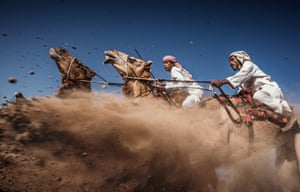 Camel Ardah, in Oman, one of the traditional styles of camel racing