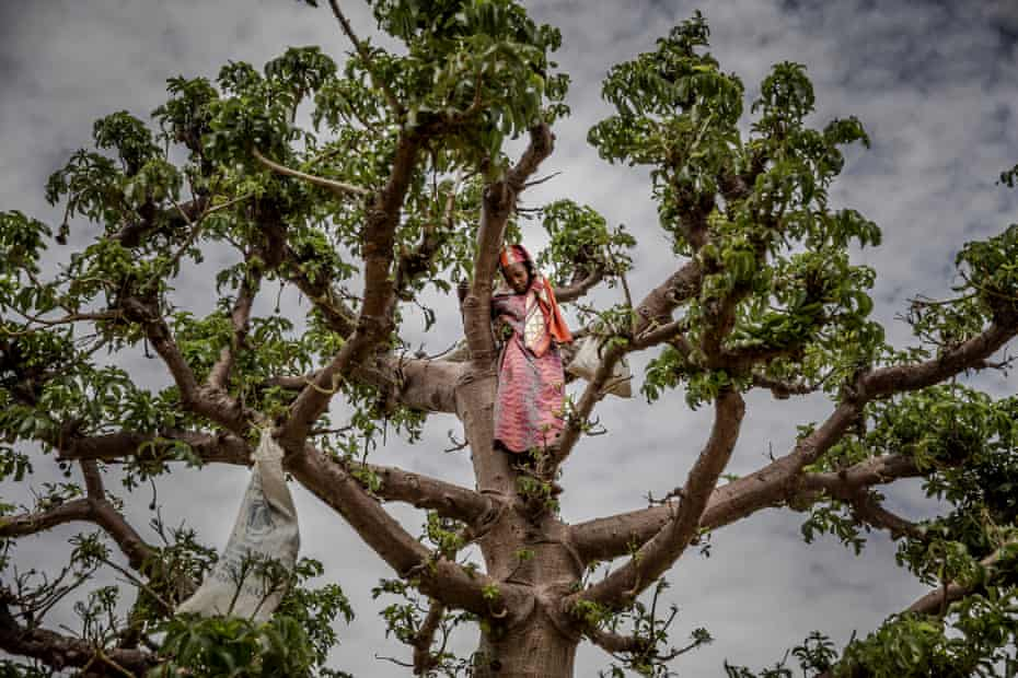 'It's gentle and poetic' … a girl climbs 'the tree of life'.