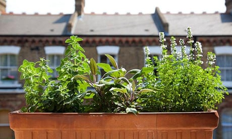 'Grow three herbs and build up' – the millennial's guide to gardening