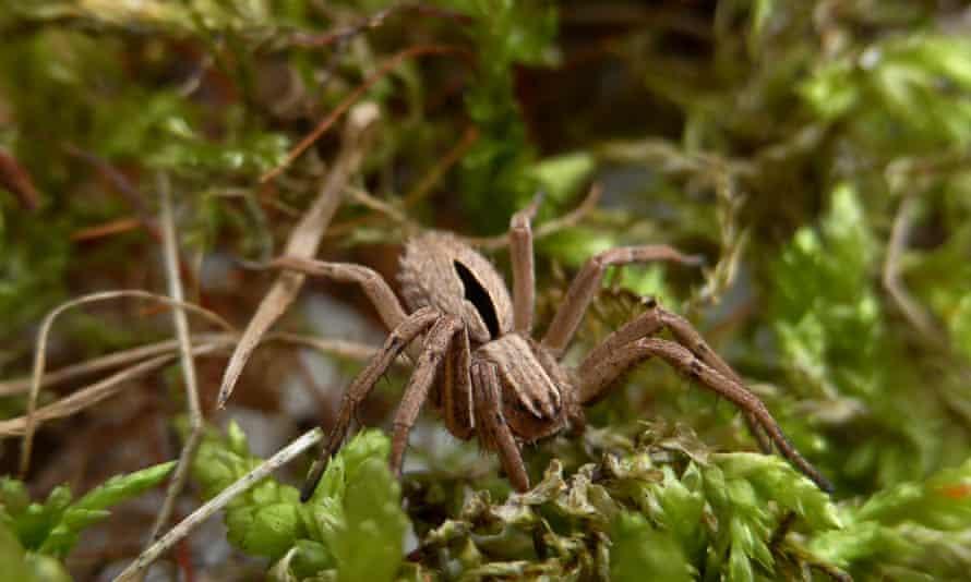 Diamond spider
