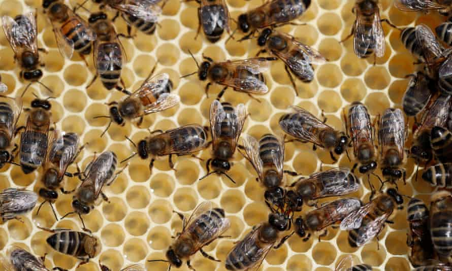 Beekeepers in the US lost 40% of their colonies in the past year, raising concerns about the effects of pesticides.