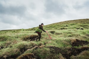 Hrefna, a volunteer of the Icelandic forest service (IFS)