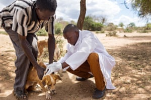 Dr Ogonji Humphrey examines a dog