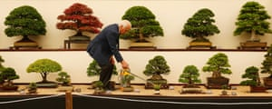 Reg Bolton waters the trees on the Federation of British Bonsai Societies stand