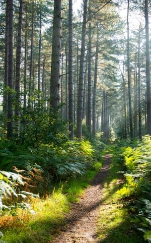 Early morning light in Sherwood Forest, Blidworth Nottinghamshire England UK