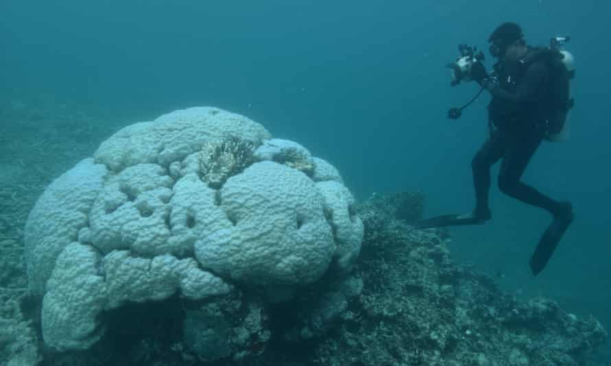 University of Queensland researcher photographs a bleached Porites coral at Loomis Reef, Lizard Island, during the 2016 coral bleaching event