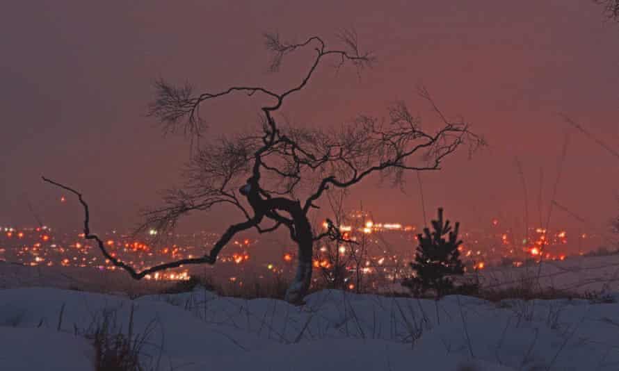 Birch tree on Lightwood skyline looking into Buxton.