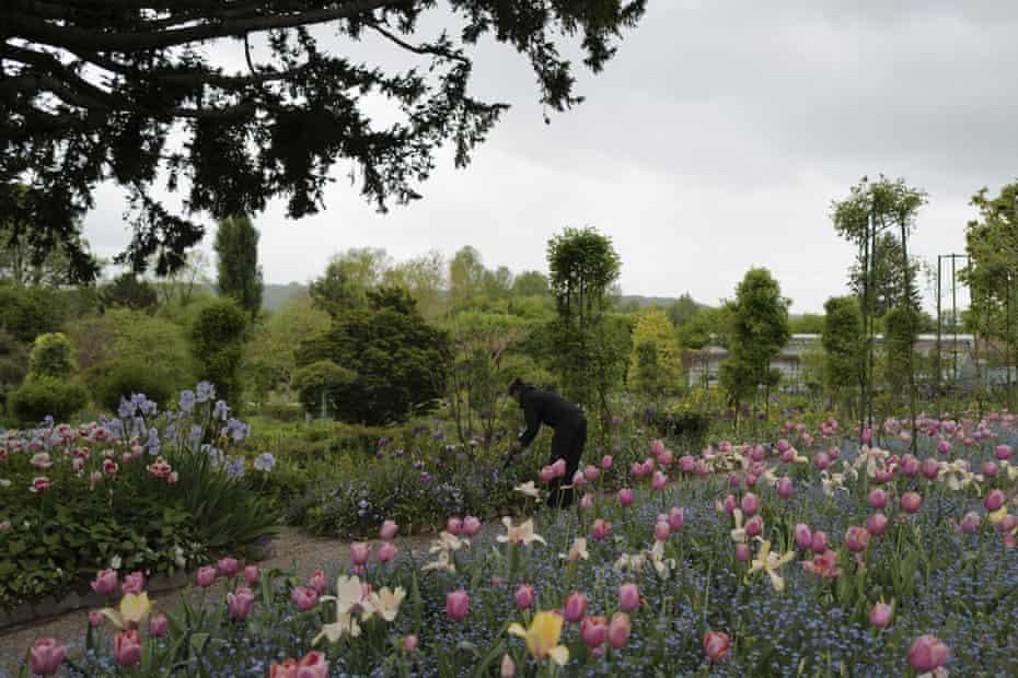 English gardener Claire-Helene Marron works in the garden of Claude Monet's house.