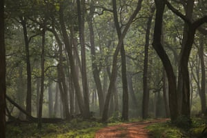 Forest, Nagarhole National Park, India.