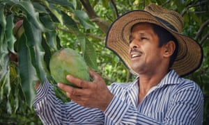Colombian mango farmer Don Roiman is a member of an organic mango association from whom inclusive business Nathalie's Direct Trade sources from