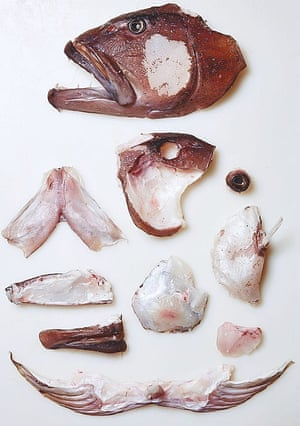 Red flags at the fish shop: Josh Niland's guide to sustainable seafood